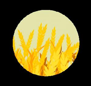ferme-des-jenvries-champs
